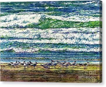 Caspian Terns By The Ocean Canvas Print
