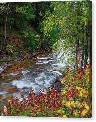 Canvas Print featuring the photograph Castle Creek Beauty by Tim Reaves
