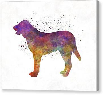 Castro Laboreiro Dog In Watercolor Canvas Print by Pablo Romero