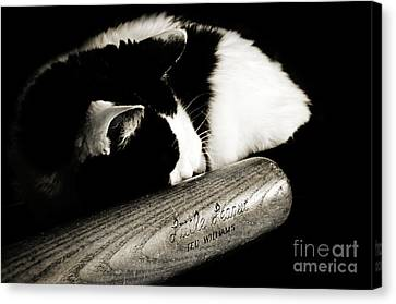 Cat And Bat Canvas Print by Andee Design