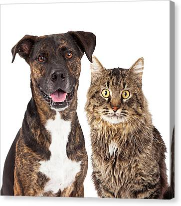 Head Shot Canvas Print - Cat And Dog Closeup by Susan Schmitz