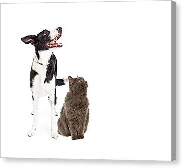Cat And Dog Looking Up Into Blank Copy Space Canvas Print by Susan Schmitz