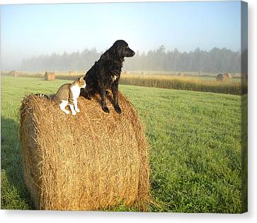 Cat And Dog On Hay Bale Canvas Print by Kent Lorentzen