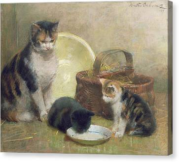Cat And Kittens Canvas Print by Walter Frederick Osborne