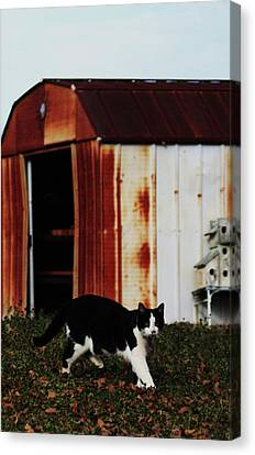 Cat And The Tool Shed Canvas Print by Kim Henderson