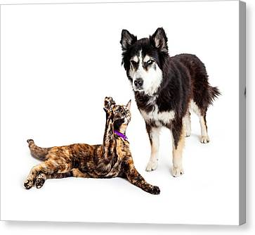 Malamute Canvas Print - Cat Batting At Angry Dog by Susan Schmitz
