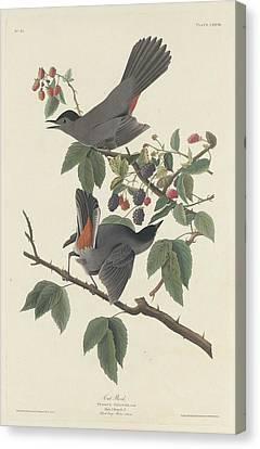 Cat Bird Canvas Print by Rob Dreyer