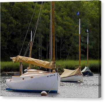 Cat Boats Canvas Print by Michael Friedman