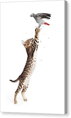 Cat Catching Bird In Flight Canvas Print
