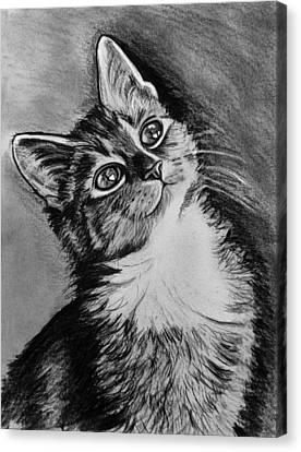Cat Charcoal Canvas Print by Ornella Di Scala