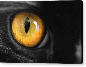 Cat Canvas Print by Craig Incardone