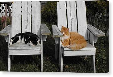 Cat Days Of Summer Canvas Print by David and Lynn Keller