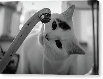 Cat Drinking Water From Faucet Canvas Print by A*k
