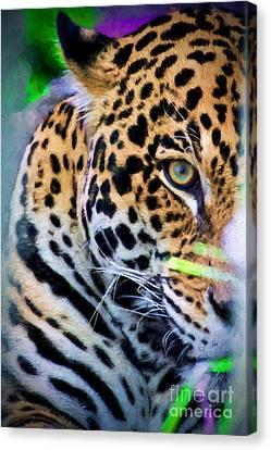 Cat Eye Canvas Print by Judy Kay