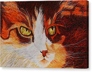 Cat Eye Canvas Print by Shahid Muqaddim