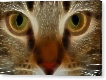 Cat Eyes Canvas Print by Kathleen Stephens