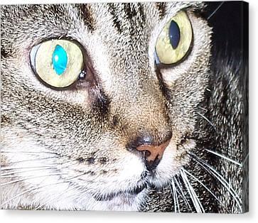 Cat Eyes Canvas Print by Martha Hoskins