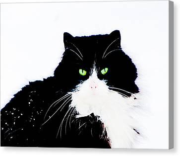 Canvas Print featuring the digital art Cat Eyes by Yury Bashkin