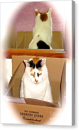 Cat In A Box Canvas Print by Phyllis Kaltenbach