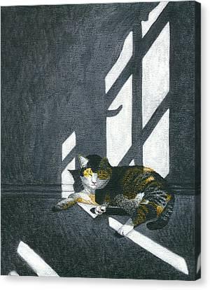 Cat In Empty Room Canvas Print by Carol Wilson