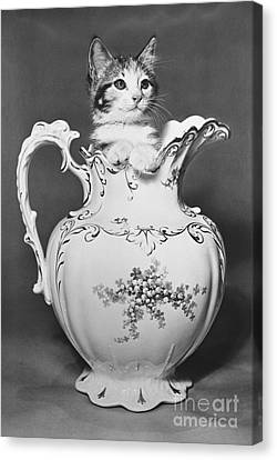 Cat In Pitcher Canvas Print by Larry Keahey