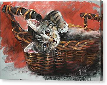 Cat Drawings Canvas Print - Cat In The Basket by Ylli Haruni