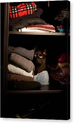 Canvas Print featuring the photograph Cat In The Closet by Laura Melis