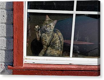 Cat In The Red  Window Canvas Print