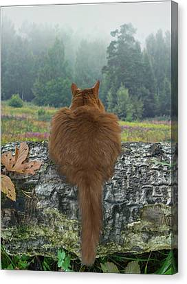 Canvas Print featuring the photograph Cat In The Wild by Vladimir Kholostykh
