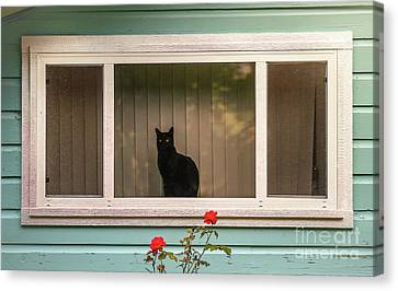 Cat In The Window Canvas Print by Robert Frederick