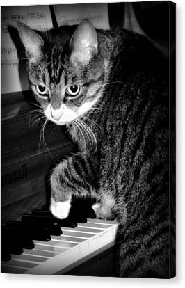 Cat Jammer Canvas Print