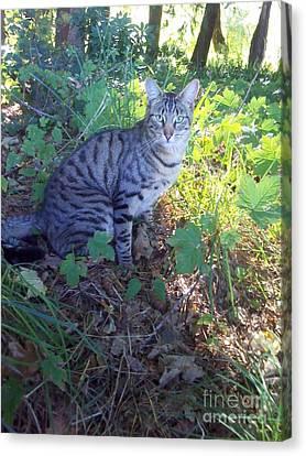 Canvas Print - Cat by Joyce Woodhouse