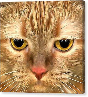 Cat Musya Canvas Print by Sergey Lukashin