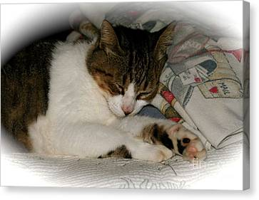 Canvas Print featuring the photograph Cat Nap by The Art of Alice Terrill
