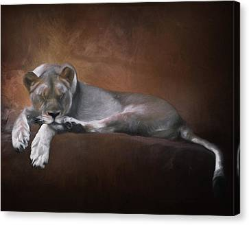 Lioness Canvas Print - Cat Nap by David and Carol Kelly