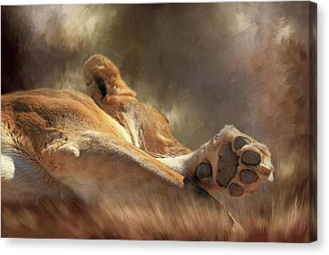 Lioness Canvas Print - Cat Nap by Donna Kennedy
