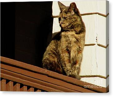 Cat On A Porch Canvas Print
