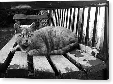 Canvas Print featuring the photograph Cat On A Seat by RKAB Works