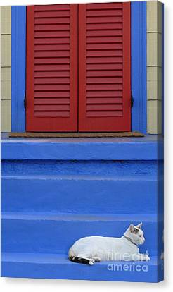 Cat On Blue Steps Canvas Print by Jeanne  Woods