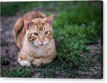 Canvas Print featuring the photograph Cat On Genoves Park Cadiz Spain by Pablo Avanzini