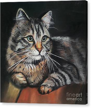 Cat Pastel Drawing Canvas Print