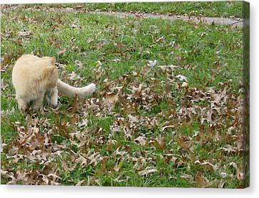 Cat Playing In The Leaves Canvas Print