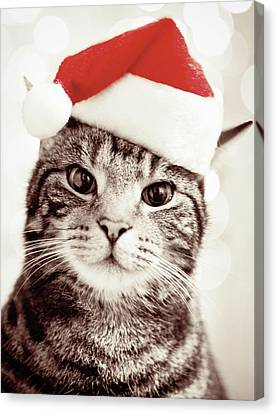 Cat Wearing Christmas Hat Canvas Print by Michelle McMahon