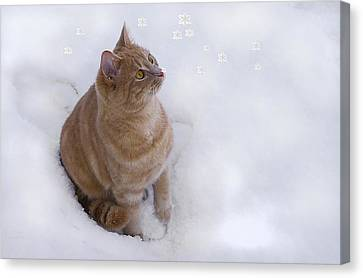 Cat With Snowflakes Canvas Print by Jacqi Elmslie