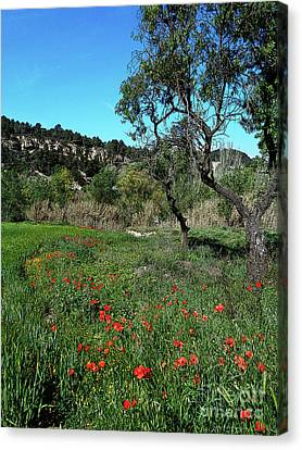 Catalan Countryside In Spring Canvas Print
