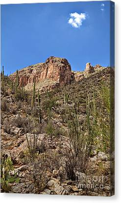 Catalina Cliff In Tucson, Arizona Canvas Print by Rincon Road Photography By Ben Petersen