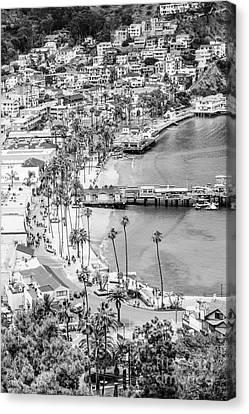 Catalina Island Aerial Black And White Photo Canvas Print