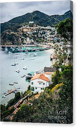 Catalina Island Avalon Bay From Above Picture Canvas Print by Paul Velgos