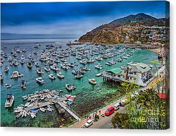 Catalina Island  Avalon Harbor Canvas Print by David Zanzinger