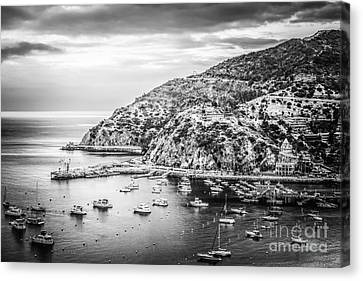Catalina Island Black And White Photo Canvas Print by Paul Velgos